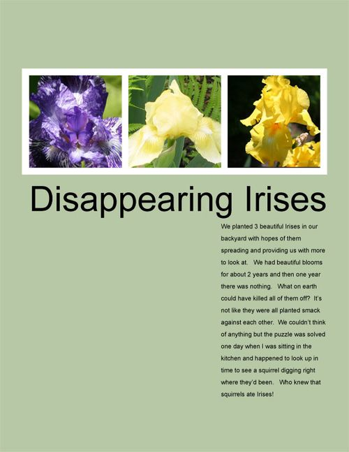 DYLWeek5#3Irises